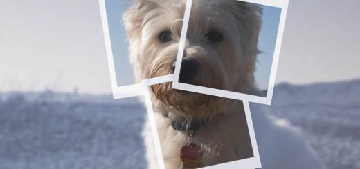 dog pieces Polaroid